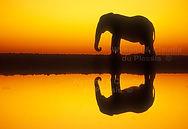 elephant-reflection-etosha-namibia