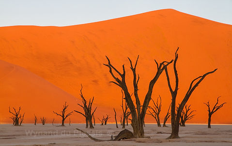 Deadvlei at sunset: landscape081