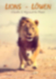 Lions - Löwen