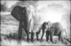 Elephant cow and calf feeding, Etosha, Namibia _ Black-White032