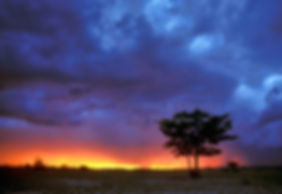 Mopane tree at sunset in Etosha: landscape004