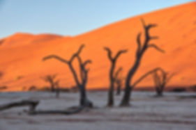 Deadvlei at sunrise, Namibia - landscape080
