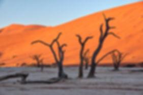 Deadvlei at sunrise, Namibia - landscape080