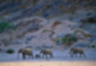 Elephant herd in the Hoanib river, Namibia - elephants042