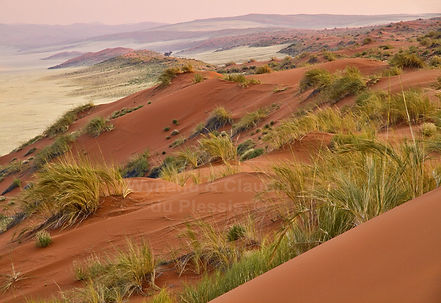 Elim dunes before sunrise: landscape052