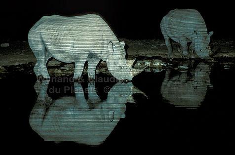 Black rhino drinking at night, Etosha, Namibia - wildlife006
