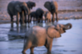 Elephants drinking at Gobaub waterhole in Etosha, Namibia: elephants101
