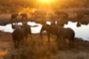 Elephant herd at sunset, Halali, Etosha, Namibia - elephants016