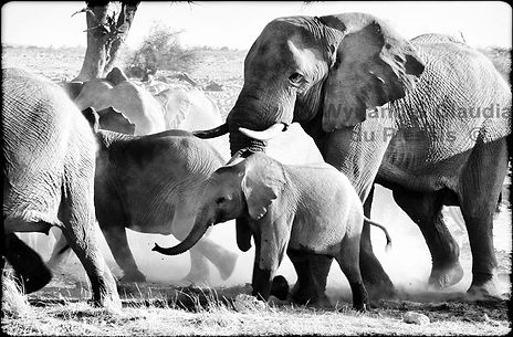 Elephants gather at a waterhole, Etosha, Namibia _ Black-White048