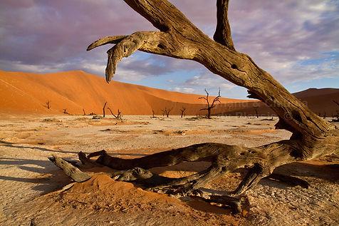 Deadvlei, Namib Desert: landscape008