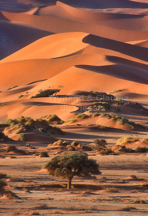 Enchanting dunes of the Namib: landscape022