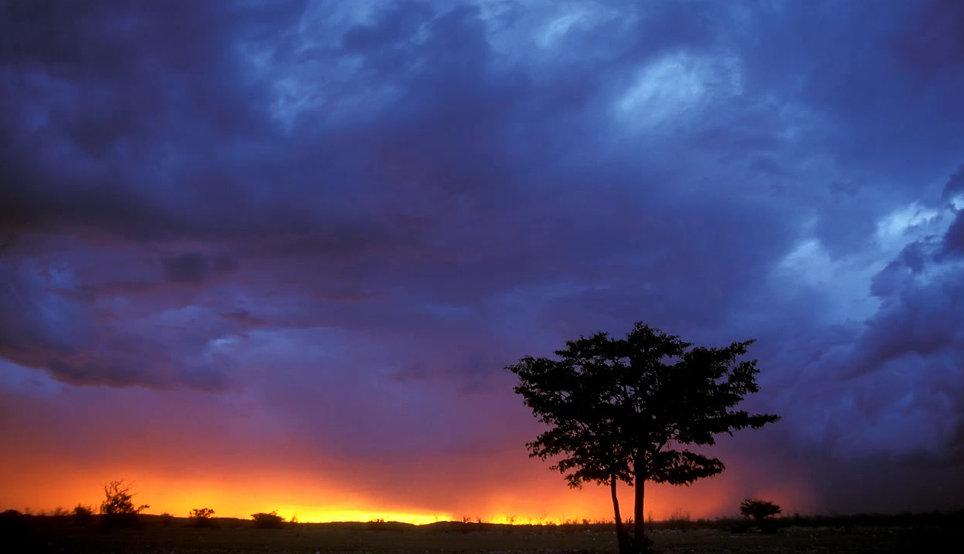 Mopane tree sunset photo animation