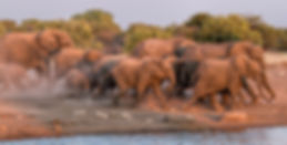 Elephants rushing to Chudop waterhole in last light, Etosha, Namibia - elephants053