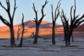 Deadvlei at sunrise, Namibia - landscape078
