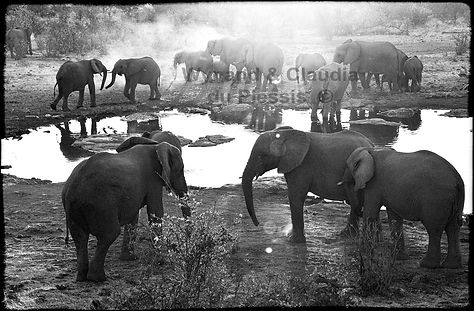 Elephants at sunset, Etosha, Namibia _ Black-White015