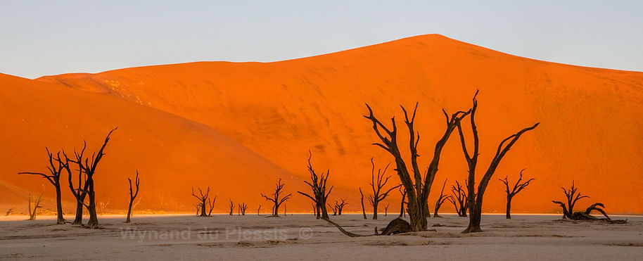 Deadvlei at sunset: landscape082
