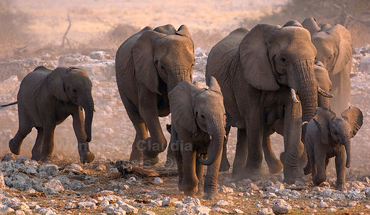 Elephants running to a waterhole, Etosha - elephants165