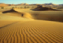 Sand ripples in the Namib: landscape066