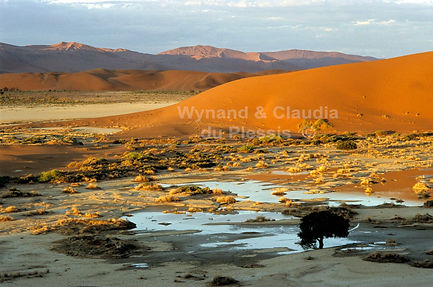 Flooded pan near Sossusvlei: landscape061