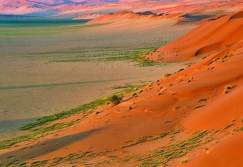 Elim dune in the rainy season: landscape030