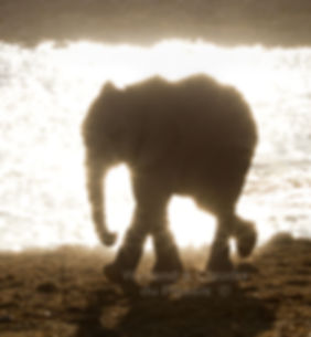 Elephant calf in front of sparkling waterhole, Etosha, Namibia - elephants052