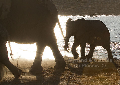 Elephant calf with mother in front of sparkling waterhole, Etosha, Namibia - elephants051