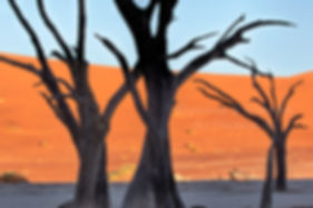 Deadvlei at sunrise, Namibia - landscape079
