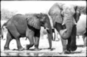 Elephants at a waterhole, Etosha, Namibia _ Black-White051