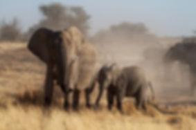 Elephant cow & calf, Etosha, Namibia - elephants071