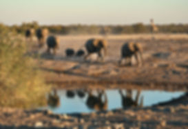 Elephant herd arrives at Chudop waterhole, Etosha - elephants022