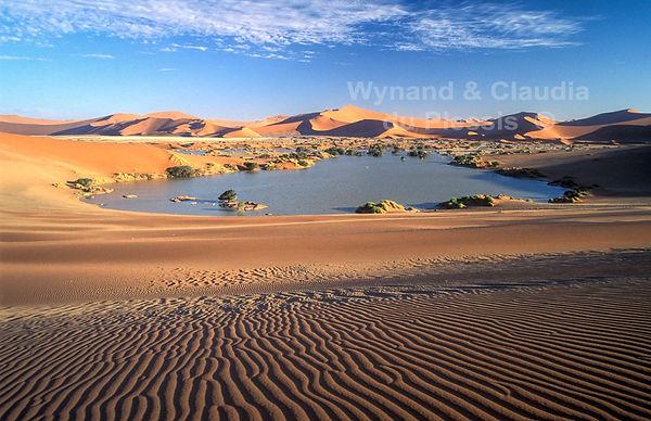 Sossusvlei & sand ripples: landscape063