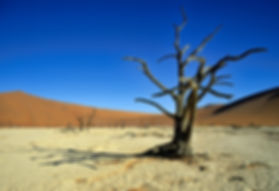 Deadvlei in the Namib Desert: landscape009