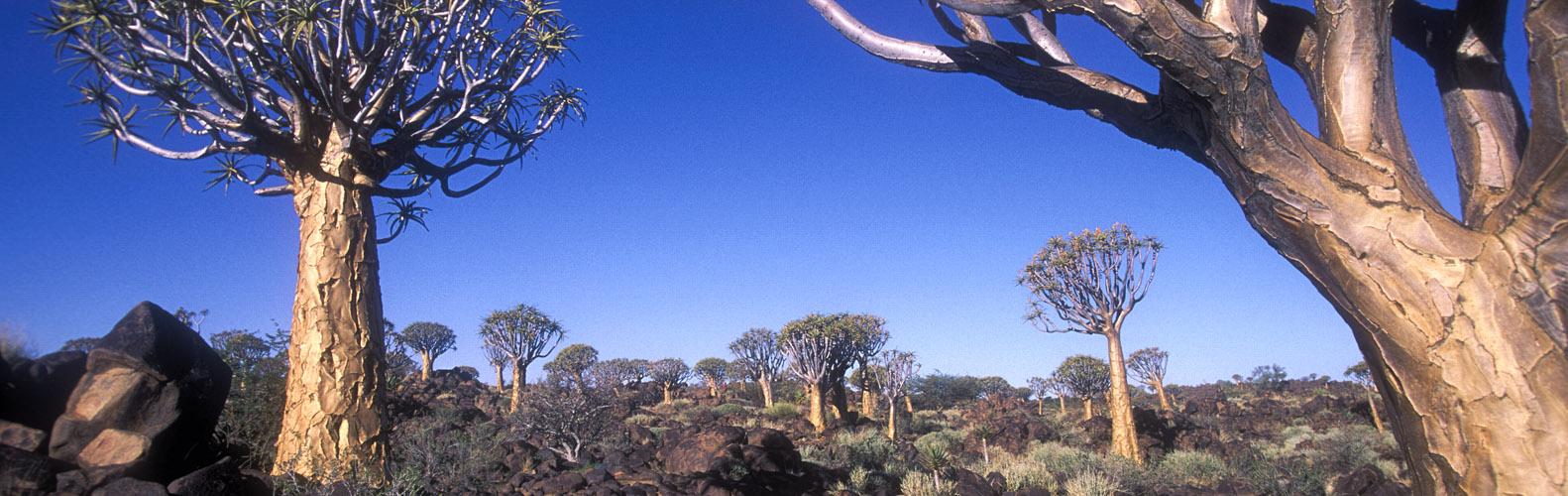 landscape035p
