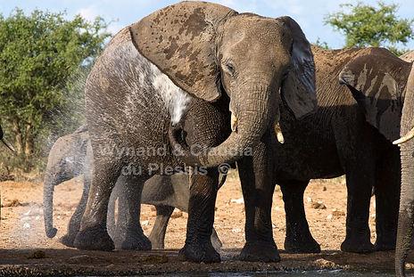 Elephants cooling down, Etosha, Namibia - elephants062