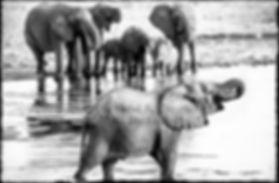 Elephants drinking, Etosha, Namibia _ Black-White055