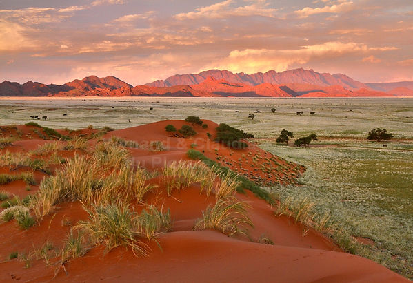 Elim dune at sunset: landscape060