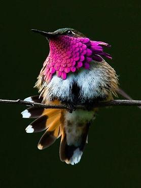 oiseau_2.jpeg