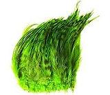 GREEN GRIZLLE (2).jpg