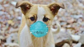 香港空氣污染嚴重 送皂緩解毛孩皮膚問題