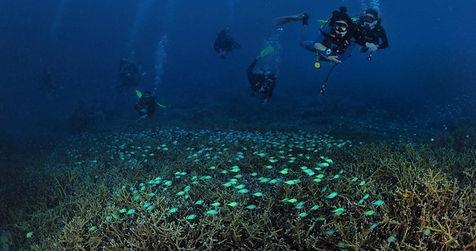 Divers.jpeg
