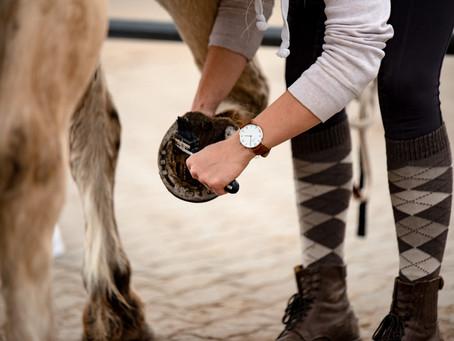 Ich fahre dann mal zum Ponyunterricht