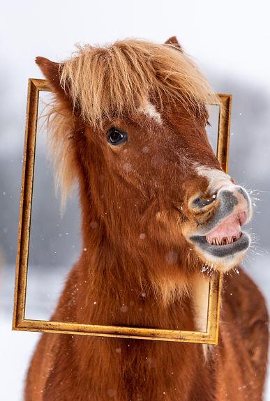 Isländer lacht.jpg