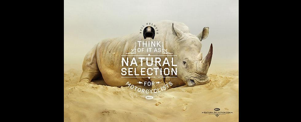Bell Rhino_V3_Wide.jpg