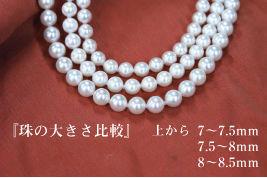 杉本メガネ|真珠