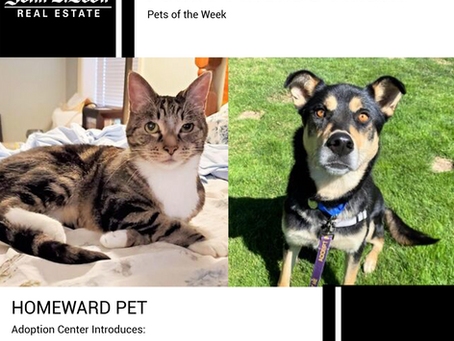 Furry Friends Friday Pet of the Week! Sept 17, 2021