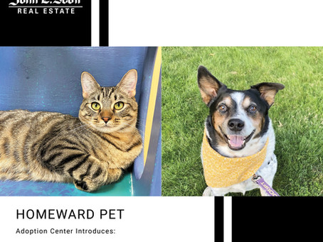 Furry Friends Friday Pets of the Week! 10.15.21