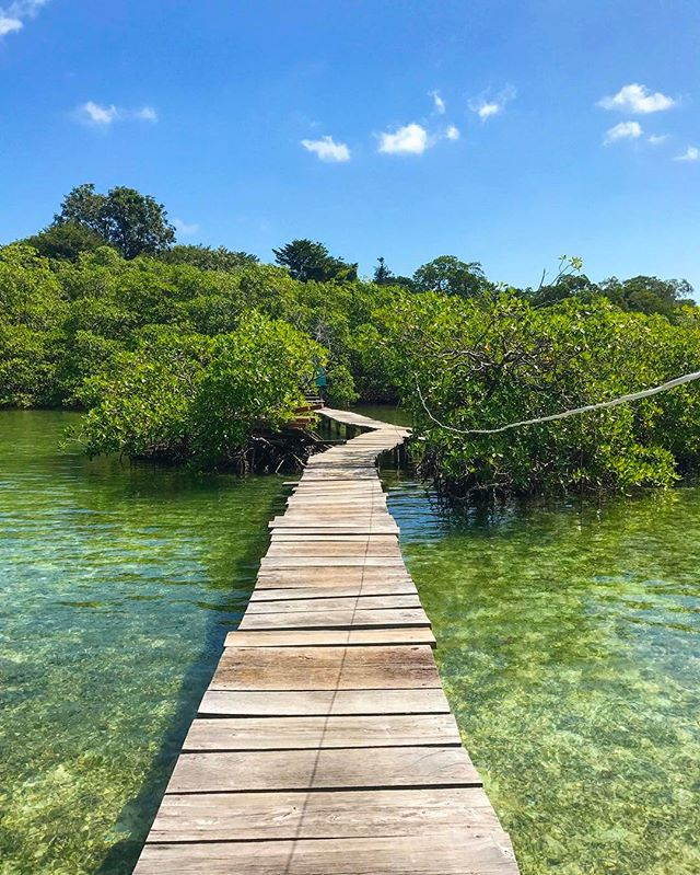 Where will your pathways lead you _ #bocasdeltoro #panama _ #island #ilife -_-_#travel #traveling #travelgram #instatravel #wanderlust #back