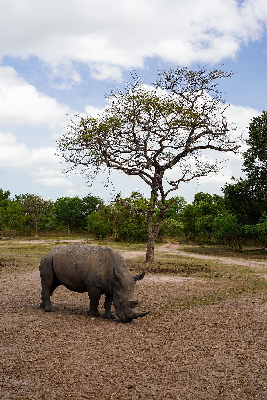 rhino at fathala reserve senegal