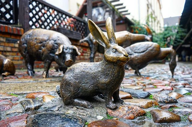 I came across this #bronze #statue of a #rabbit while #walking the back _streets of #Wroclaw #Poland  #travel #traveling #travelgram #instat