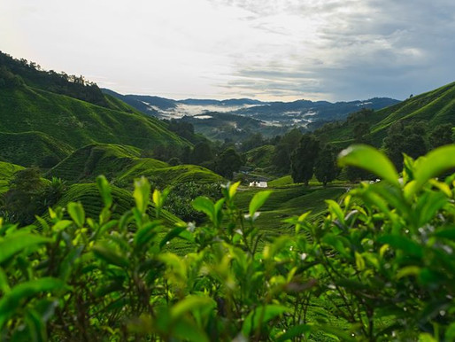 touring | malaysia - asia's unknown multicultural gem